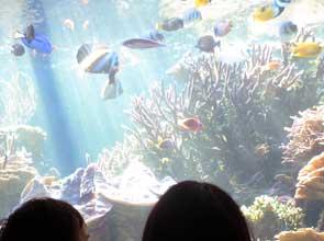 20061005_4.jpg